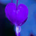 Purple Bleeding Heart Flower by Michael Moriarty