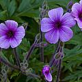 Purple by Dennis Reagan