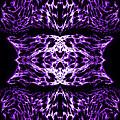 Purple Series 5 by J D Owen