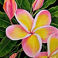 Rainbow Plumeria by Mary Deal