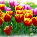 Red And Yellow Tulips by Allen Beatty