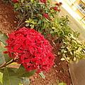 Red Flower by Artist Nandika  Dutt