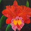 Red Orchid by Jenny Lee