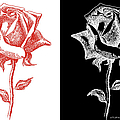 2 Red Rose Drawing Combo by Gordon Punt
