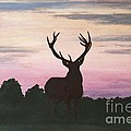 Red Stag At Dusk by Shirley Miller