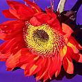 Red Sunflower by Kume Bryant