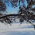 Redbud Tree In Winter by Susan Wyman