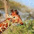 Reticulated Giraffe Kenya by Liz Leyden