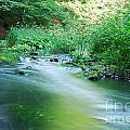 River by Sarka Olehlova