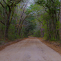 Headed To The Angel Oak by Dale Powell