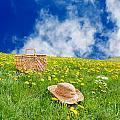 Rolling Dandelion Meadow by Jo Ann Snover