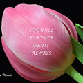 Romantic Pink Tulip by Jeannie Rhode
