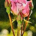 Rose Flower by George Atsametakis