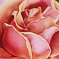 Rose  by Irina Sztukowski