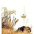 Sailboat by Barbara Henry