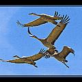 Sandhill Cranes In Flight by Larry White