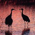 Sandhill Cranes by Steven Ralser