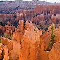 Sandstone Hoodoos Bryce Canyon  by Yva Momatiuk John Eastcott