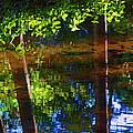 Santa Anita Creek by Viktor Savchenko