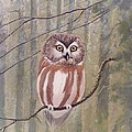 Saw Whet Owl by Alan Suliber