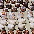 Sea Shells by Werner Lehmann