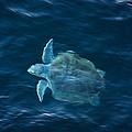 Sea Turtle by Tammy Schneider