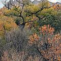 Sedona Fall Color by Tam Ryan