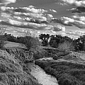 Serenity by Tom Druin