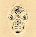 Skull In Sepia by Rob Hans