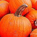 Small Pumpkins by Dora Sofia Caputo Photographic Design and Fine Art