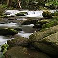 Smoky Mountain Stream by Cindy Haggerty