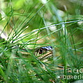 Snake In The Grass by Neal Eslinger