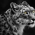 Snow Leopard by Nina Bradica