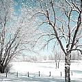 Snowy Trees On The Erie Canal by Meegan Streeter