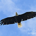 Soaring High 2 Hdr by Sharon Talson