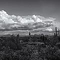Sonoran Desert In Black And White  by Saija  Lehtonen