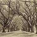 Southern Journey Sepia by Steve Harrington