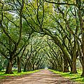 Southern Journey  by Steve Harrington