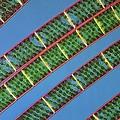 Spirogyra Algae, Light Micrograph by Science Photo Library