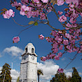 Spring Blossom And Memorial Clock by David Wall