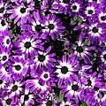 Spring Flowers by Douglas Miller