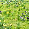 Spring Flowers by Tom Gowanlock