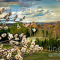 Spring Time by Robert Bales