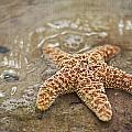 Starfish On Beach by Regina  Williams
