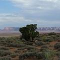 Still Life In The Desert by Sian Lindemann