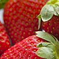 Strawberries by Tim Hester