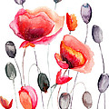 Stylized Poppy Flowers Illustration  by Regina Jershova