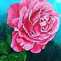 Summer Rose by Herschel Fall