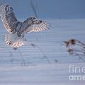 Sunlit Wings by Cheryl Baxter