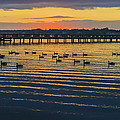 Sunset Geese by Brian Wallace